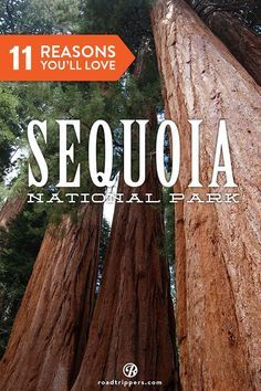 Sequoia National Park is one of America's most incredible national parks.