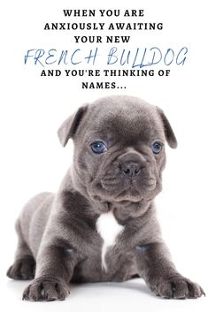 When you are anxiously waiting for your French Bulldog to join you, you and you're thinking about good Frenchie names... Lilac French Bulldog, French Bulldog Names, French Bulldog Puppies, French Bulldogs, Dachshunds, Pugs, Cute Names, Love French, Dog Things