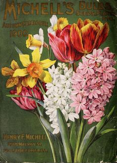 Michell's 1900 catalogue
