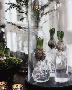 ~ hyacinth in glass ~ #homedecor #myhome #hyacinth #glass #instainspiration #christmas #christmasdecorations #nordicinspiration #interior #december #2016