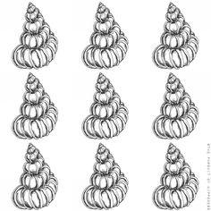 Seashells 2 Spiral- Pen Illustration