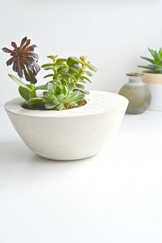 Show off your eclectic home decor style with a DIY pot and fresh succulent.