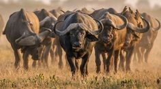 Best in Travel - Top 10 countries to visit in 2020 - Lonely Planet Photography Articles, Wildlife Photography, African Animals, African Safari, Lonely Planet, Nature Animals, Animals And Pets, Wild Animals, Kenya