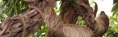 Costa Rica sluit dierentuinen en bevrijdt alle dieren die in gevangenschap worden gehouden - http://www.ninefornews.nl/costa-rica-sluit-dierentuinen-en-bevrijdt-alle-dieren-die-in-gevangenschap-worden-gehouden/