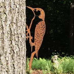 Red-bellied Woodpeckers (Melanerpes carolinus) are medium sized birds with a distinctive black-and-white barred pattern on their back and a long, black chisel-s White Bar, Black And White, Backyard Birds, Giraffe, Red, Animals, Felt Giraffe, Animales, Black N White