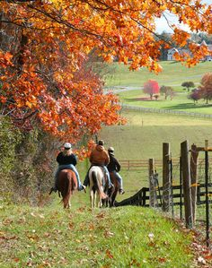 Trail riding on a crisp cool Autumn day.  Does it get any better?  And Dennis and I have a horseback ride scheduled in Midway...yay!
