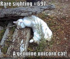 People send me unicorn memes on a daily basis. Funny Cat Memes, Funny Cats, Funny Animals, Cute Animals, Animal Fun, Hilarious, Funniest Animals, Crazy Animals, Funny Minion