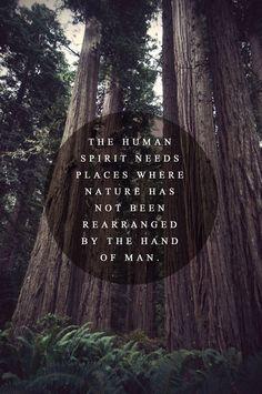 into the wild we roam...