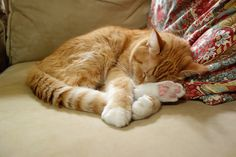 8/15/13 - nap time by Plain Chicken, via Flickr
