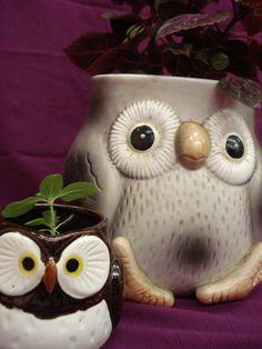 plants IN AN OWL @Rachel Ellis