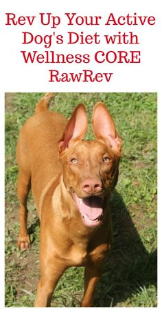 Active dogs need a diet that supports their bones, muscles and joints! Check out how we revved up Freya's diet with Wellness CORE RawRev! (ad) #RawRevolution