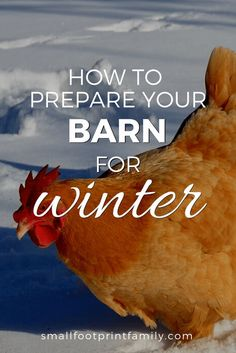 Winter is just around the corner, and that means you need to prepare your barn to weather the cold. Here are some tips on how to winterize your barn, so that you and your livestock can have an easy hassle-free winter! #homesteading #chickens #backyardchickens #homestead #sustainability #livestock #permaculture