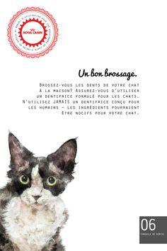 Brossez-vous les dents de votre chat? Si oui, notre plus récente capsule du Guide pour passionnés des chats vous propose un conseil important que vous ne pouvez pas manquer.