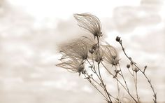Fall Photography, Autumn Art Print, Wind sculpted, Minimalism, Rustic, Home Decor, Brown, Tan,  Khaki, Country - Windblown