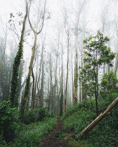 Foggy walk through Mount Sutro this morning