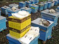 Επιθεώρηση μελισσιών για τάισμα Δεκέμβριο