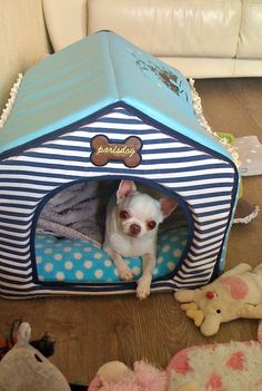 Chihuahua playhouse CUTE