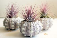 Air plants - Tillandsia - take their nutrients from the air and all they require is light (not direct sunlight) and an occasional misting of water from a spray. Buy a couple of plants and pot them up in timber offcuts, blocks of wood, or even seashells. http://www.home-dzine.co.za/garden/garden-airplants.htm#