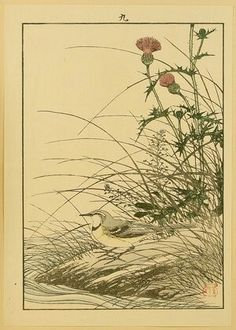 Artist:Imao Keinen  Title:Keinen Gafu - Gray Wagtail and Thistle  Date:1882.