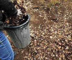 Ta hand om löven - skapa lövmull på olika sätt | Bondjäntan Bokashi, Magnolia, Canning, Gardening, Garden, Creative, Magnolias, Lawn And Garden, Home Canning