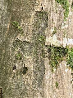 Baum geritzt# Geschnitzte Initialen# Rinde geritzt# Foto# Interessant was man an Bäumen so findet. City Photo, Animals, Pictures, Kinetic Art, Contemporary Art, Wood Carvings, Crosses, Sculptures, Animales