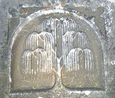 willow.jpg (491×419)