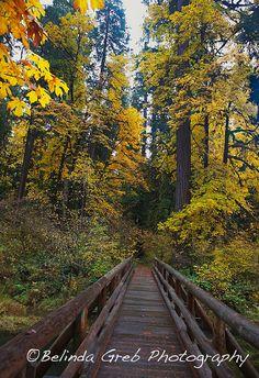 """Items similar to Fotografía de paisaje - """"cruzando el puente"""" - los árboles de la fotografía de naturaleza de impresión Fine Art puente amarillo marrón verde - impresión sin enmarcar 8 x 10 on Etsy"""