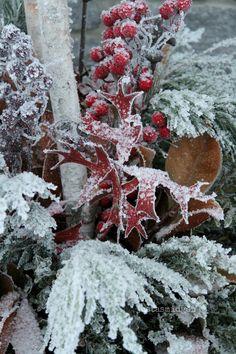 Winter Garden Pots.. all frosty xx