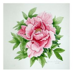 Tree  Peony Watercolour Maria Inhoven Inspiration E. Blonder