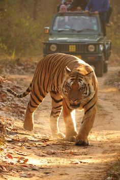 Plan your next vacation to Madhya Pradesh & explore the region's diversities. Use TripHobo for hassle free trip planning. Trip Planner, Travel Planner, Best Tourist Destinations, Places To Travel, Wild Animals, Animals And Pets, Pet Fox, Madhya Pradesh, Free Travel