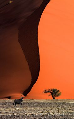 Sand Dune, Sossusvlei, Namib Desert, Namibia. Amazing color and detail in this photo, but it still fools the eye!