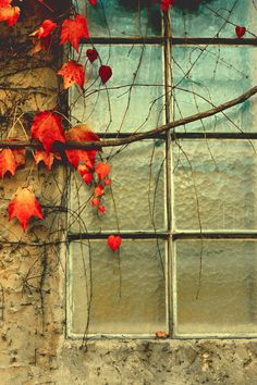 Autumn Window (by i.Anton on Flickr)