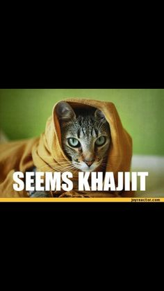 Skyrim Khajiit.  I want a whole Elder Scrolls game set in the land of the Khajits!!!!  Seriously.  Shifting sands covering and uncovering sites, moon sugar drama, and CAT PEOPLE.