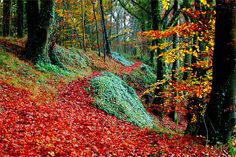 The beautiful colours of autumn in Ireland