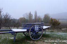 Novembre, Les Premiers Flocons de Neige,  à La Ferme aux Lavandes  Très bon hiver à tous ! Nous restons ouvert, la neige c'est juste pour décorer cette journée !