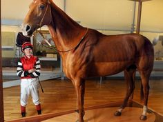 Phar Lap | The great Phar Lap | Photo Galleries and News Photos | News Pictures and Photos | Herald Sun, Champion jockey Craig Williams got a close up look of Phar Lap at the Melbourne Museum.