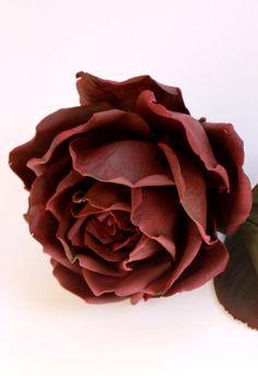 Chocolate rose )) - cake by  Elena Ujshag