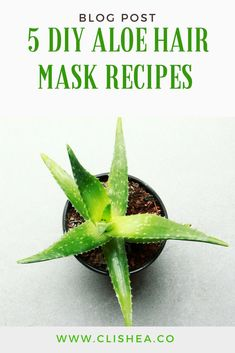 If your looking for hair treatments to address dandruff, an itchy scalp, frizzy hair, or damaged hair, try an aloe vera hair masks. Hair masks with aloe vera also works to promote hair growth and condition your natural hair. #naturalhairtips #diyhairrecipes #diyrecipes #hairmasks #bbloggers #beautybloggers #diybeautyrecipes #diybeauty #shorthairporblems #longhairproblems #damagedhair #damagedhairtreatments #natutalhairbloggers #hairbloggers #hairblog #afrohair #curlyhair #blackhair