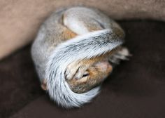 Squirrel Photo. Baby Animals. Nature Photography. Baby Room Decor.