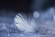 Le sentimentalisme amour - Sometimes it falls in sentimental love... https://500px.com/lafuguelogos/galleries/macro Copyright © Lafugue Logos All Rights Reserved.