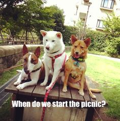 So DogGone Funny!: 16030 - Pups are ready to chow down, but when does...  #dogs #pets