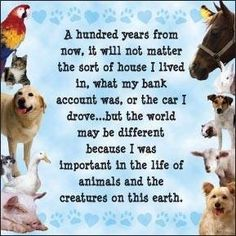 I am and always will be a pet lover. Sure, I sometimes lose my patience, but cuddling with my pets at night makes it all better.