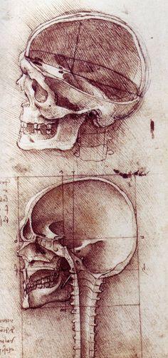 Anatomical Drawings By Leonardo Da Vinci - Gents HQ Michelangelo, Anatomy Study, Anatomy Drawing, Figure Drawing, Painting & Drawing, Skull And Bones, Skull Art, Alchemy, Art History