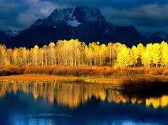 Google Image Result for http://wallpapers.bpix.org/wallpapers/42/Quaking_Aspen,_Mount_Moran,_Grand_Tetons,_Wyoming.jpg