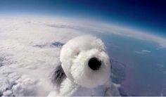 Perro de peluche alcanza la estratosfera | Ahora tratan de...