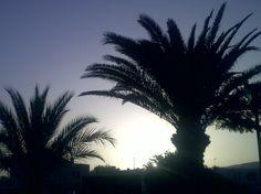Palms. I just love'em.