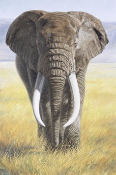 Canvas Art by Lucie Bilodeau is part of Elephant painting Power Of Nature Canvas Print by Lucie Bilodeau All canvas prints are professionally printed, assembled, and shipped within 3 4 business - Wildlife Paintings, Wildlife Art, Animal Paintings, Animal Drawings, Paintings Of Elephants, Elephants Photos, Elephant Face, African Elephant, Elephant Canvas