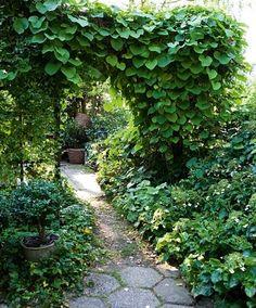 Lag en portal med klatreplanter