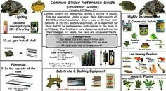 General reference for looking after yellow belly turtles