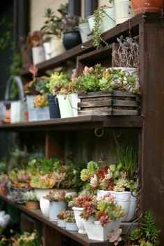 Container Gardening with French Country Flair - .Why hassle with replanting? Look how great this collection of small plants on shelves looks – many of which are probably still in their original containers.